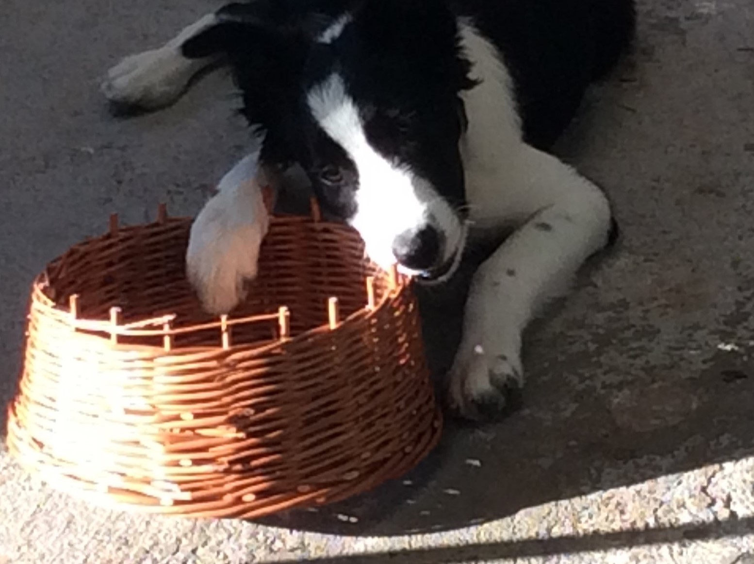 Joey-and-his-basket